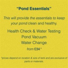 Essentials: Pond
