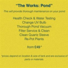 The Works: Pond