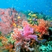 In The News: Can You Hear Coral Dying?