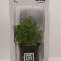 Tropica LIVE Pot - Limnophila Sessiliflora Single Pot Package
